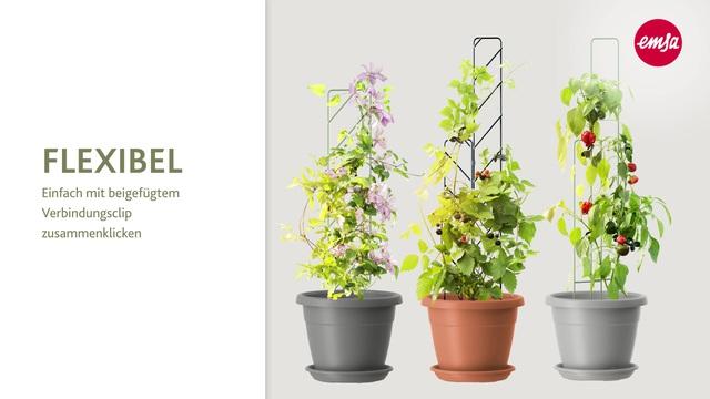 Geliebte EMSA Set: Blumenkasten »MY CITY GARDEN«, inkl. Untersetzer @ID_31
